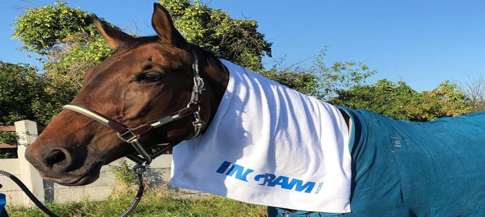 Ingram Micro presence at Show Jumping Event